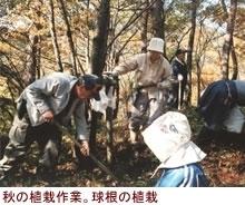 秋葉山のヒメサユリをふやそう会